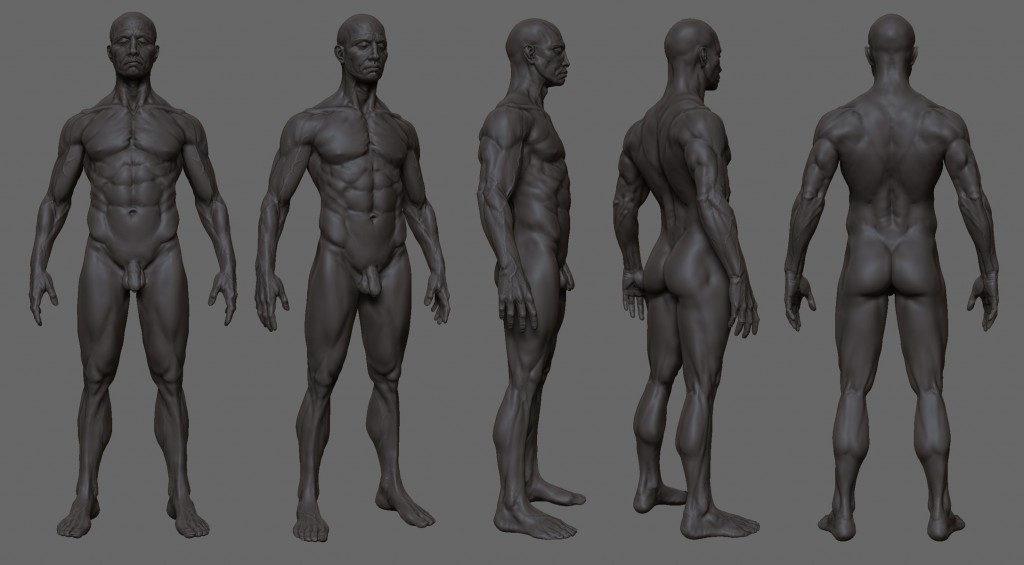 anatomy_study_zb3_by_mojette