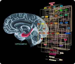 the-brain-network1-300x256